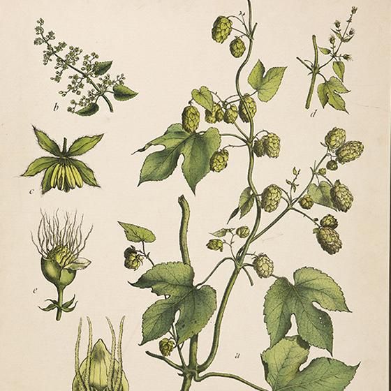 Bildet kan inneholde: blomst, anlegg, botanikk, kvist, blomstrende plante.