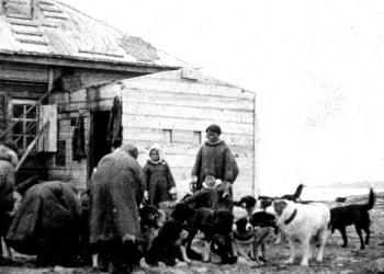 The expedition members went back to the shore with the Samoyeds and were shown around the houses and the little church. There were a dozen dogs outside the houses. Due to the shortage of food, the colony had recently had to slaughter several dogs for meat. One of the Samoyeds gave Holtedahl fossils in exchange for tobacco. The expedition also left some food at the colony before moving on.