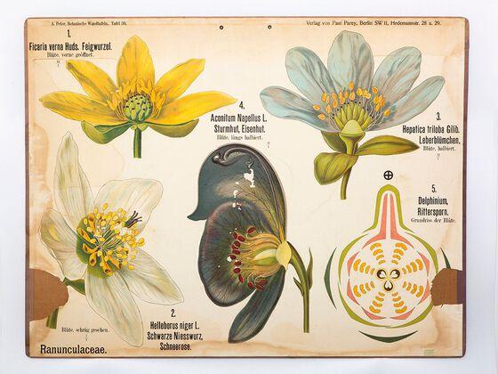 Bildet kan inneholde: botanikk, anlegg, blomst.